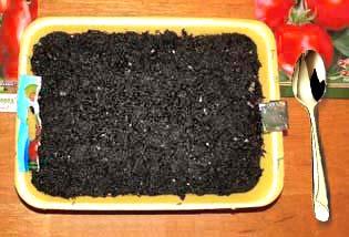Лоток с почвой для посева томатов