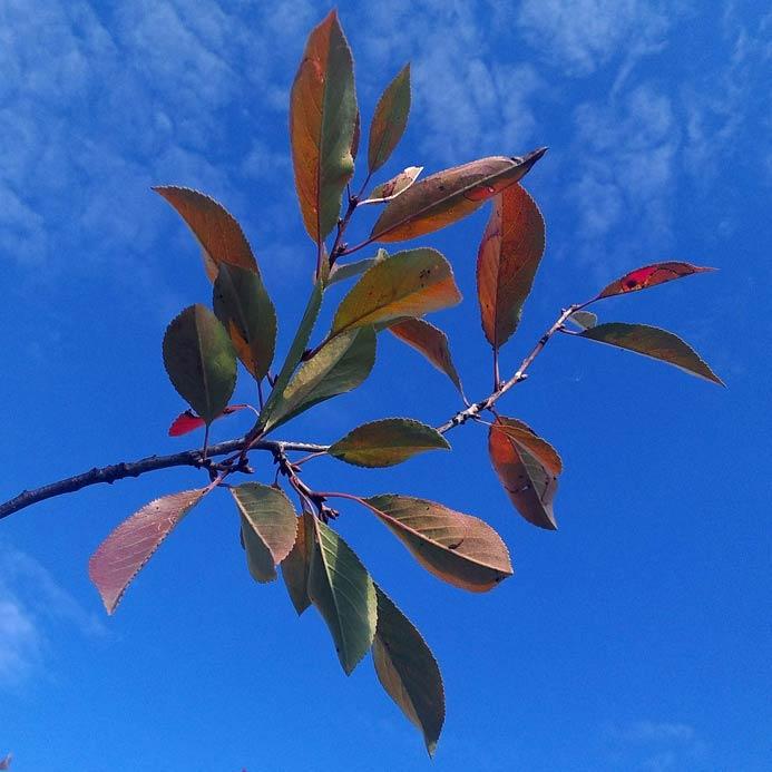 Осеннее небо в бабье лето