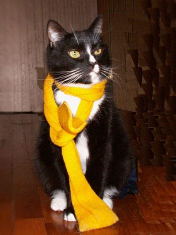 кот, по имени Кот