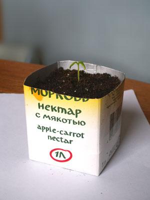 kub_tomat_rassada_m.jpg