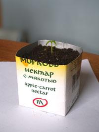 kub_tomat_rassada_s.jpg