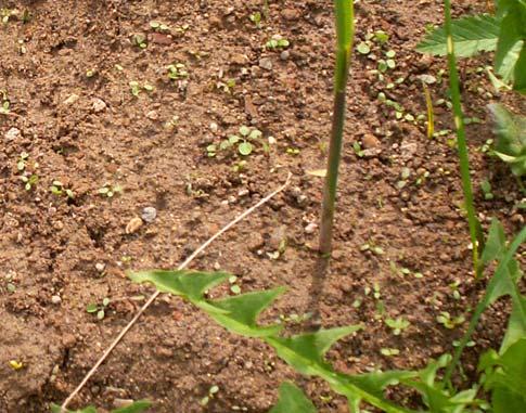 Освоение наносов растительностью