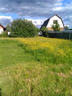 В начале июня буйно росла только трава
