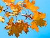 Октябрь. Золотая Осень
