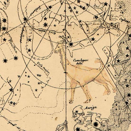 Созвездие Жираф в атласе Планциуса